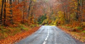 Fall road representing changing life seasons