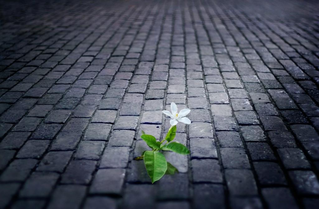white flower growing on street ,tile old brick floor at night